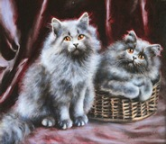Persian Grey Kittens