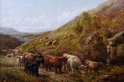 Highland Cattle by the Coast