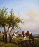 Cows with a Willow Tree