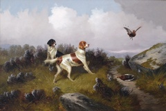 Two Setters Putting up Grouse